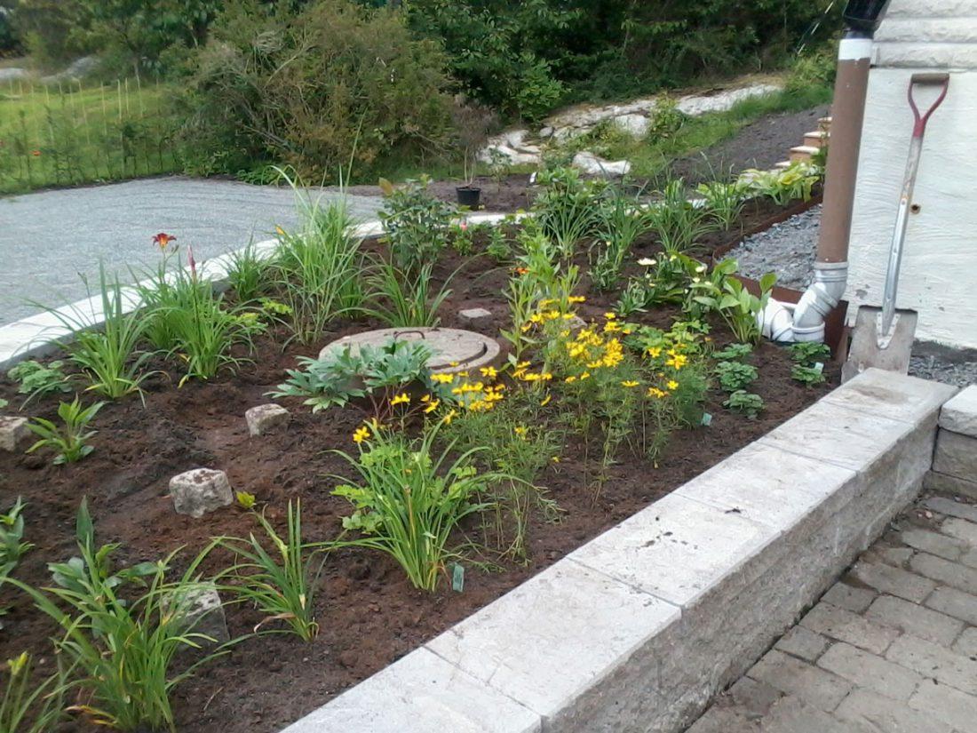 gul köksträdgård och rabatt