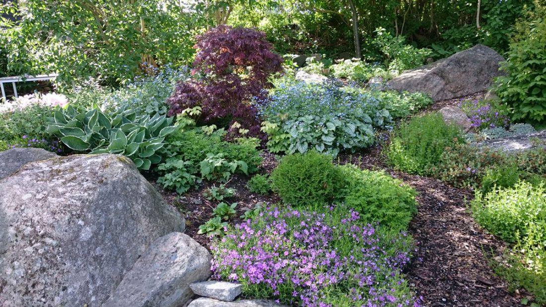 vackert bildfång i trädgården