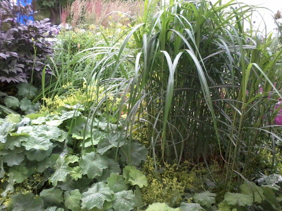 växtförslag till slänt